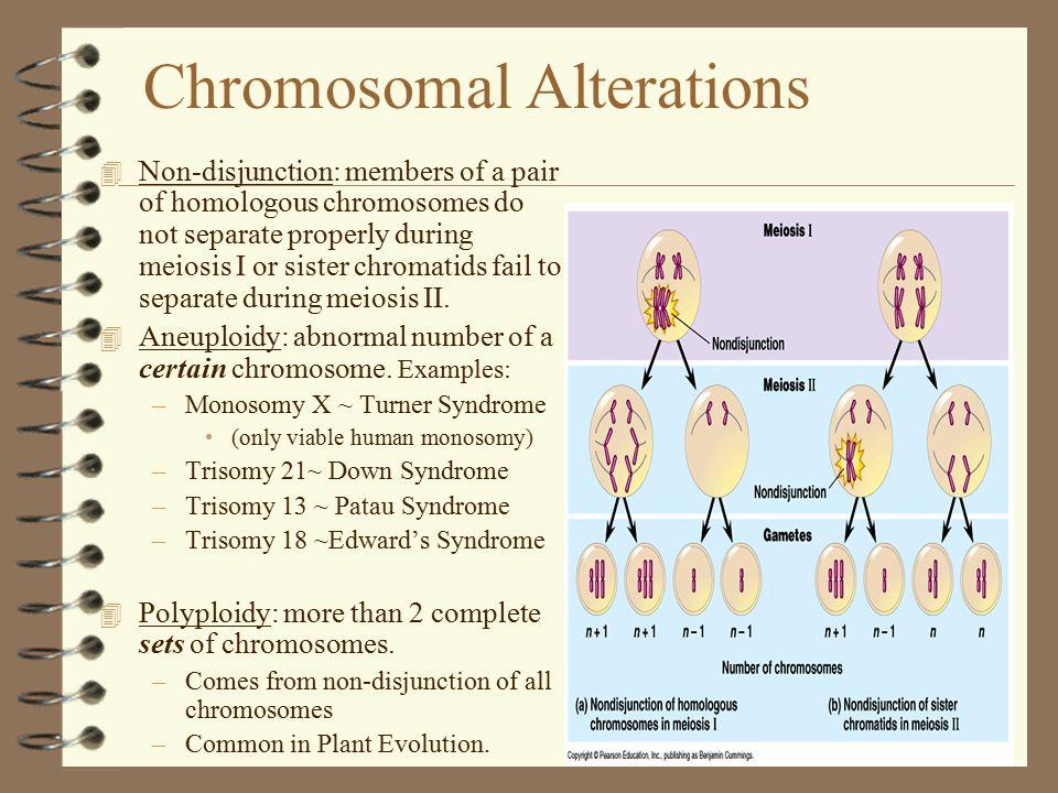 Chromosomal Alterations 4 Non-disjunction: members of a pair of homologous chromosomes do not separate properly during meiosis I or sister chromatids