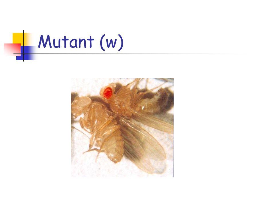 Mutant (w)