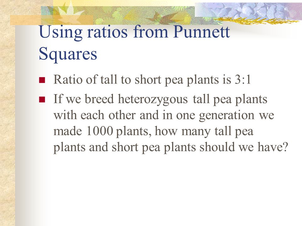 Using ratios from Punnett Squares Ratio of tall to short pea plants is 3:1 If we breed heterozygous tall pea plants with each other and in one generat