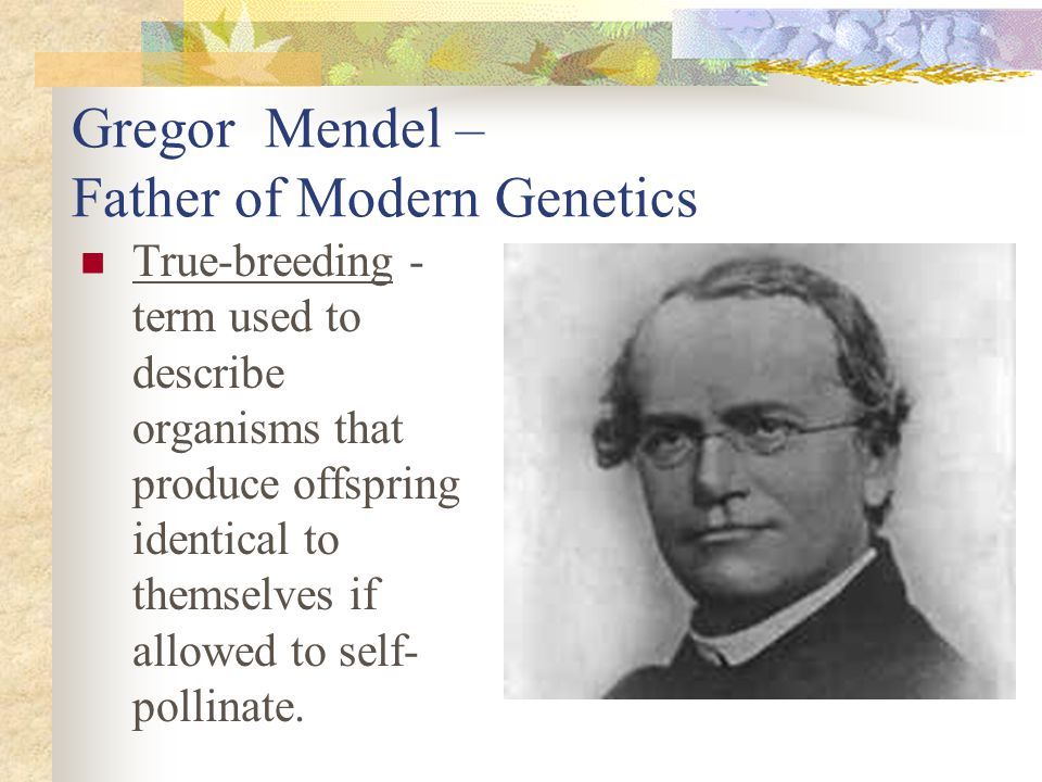 Gregor Mendel – Father of Modern Genetics True-breeding - term used to describe organisms that produce offspring identical to themselves if allowed to