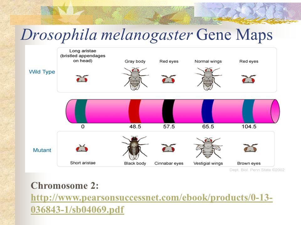 Drosophila melanogaster Gene Maps Chromosome 2: http://www.pearsonsuccessnet.com/ebook/products/0-13- 036843-1/sb04069.pdf