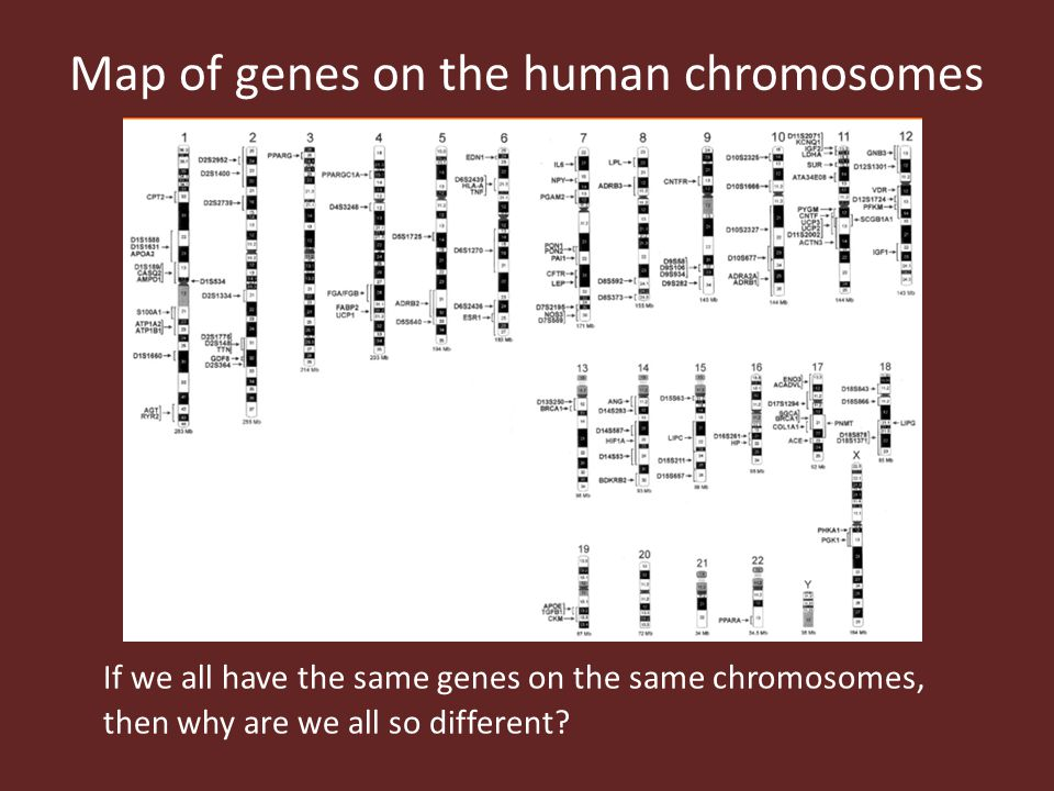 If we all have the same genes on the same chromosomes, then why are we all so different? Map of genes on the human chromosomes