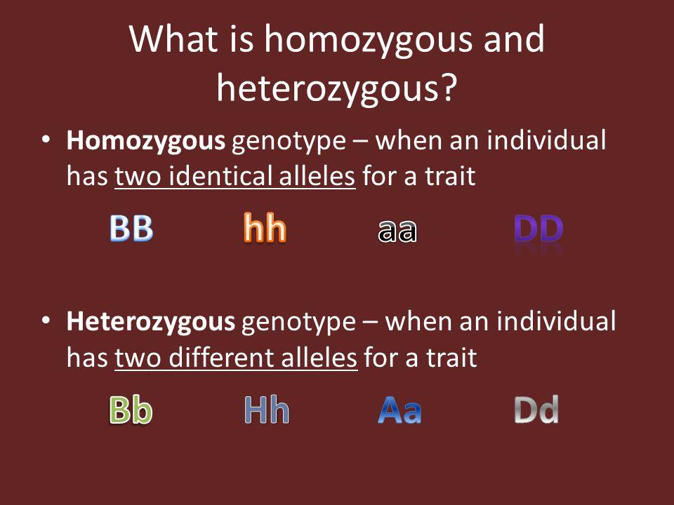 What is homozygous and heterozygous?