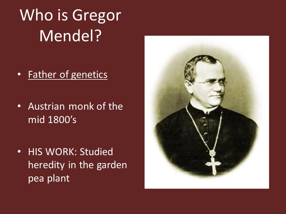 Who is Gregor Mendel? Father of genetics Austrian monk of the mid 1800's HIS WORK: Studied heredity in the garden pea plant