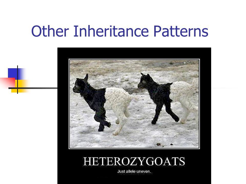 Other Inheritance Patterns