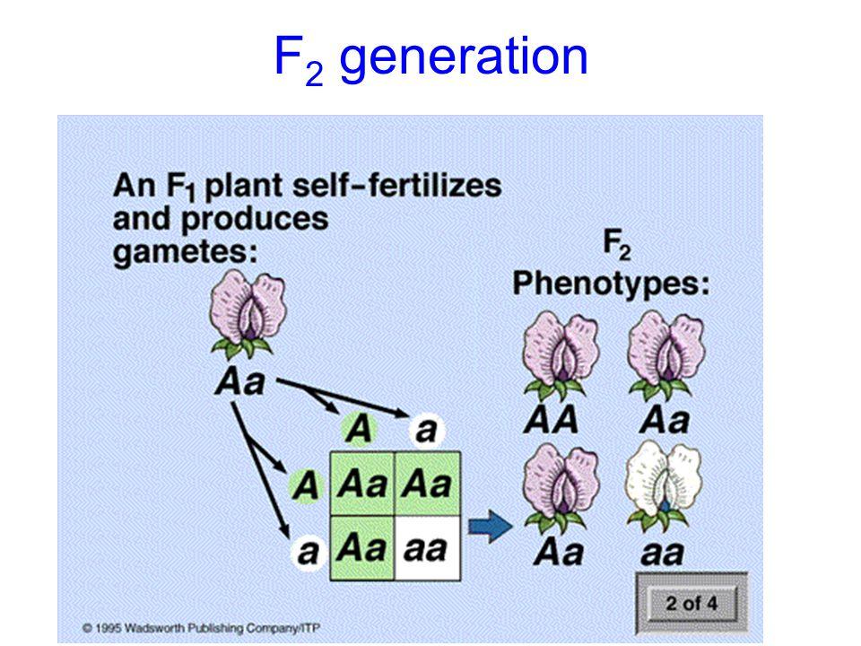 F 2 generation