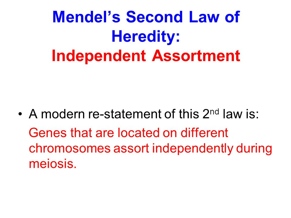 Mendel's Second Law of Heredity: Independent Assortment A modern re-statement of this 2 nd law is: Genes that are located on different chromosomes ass