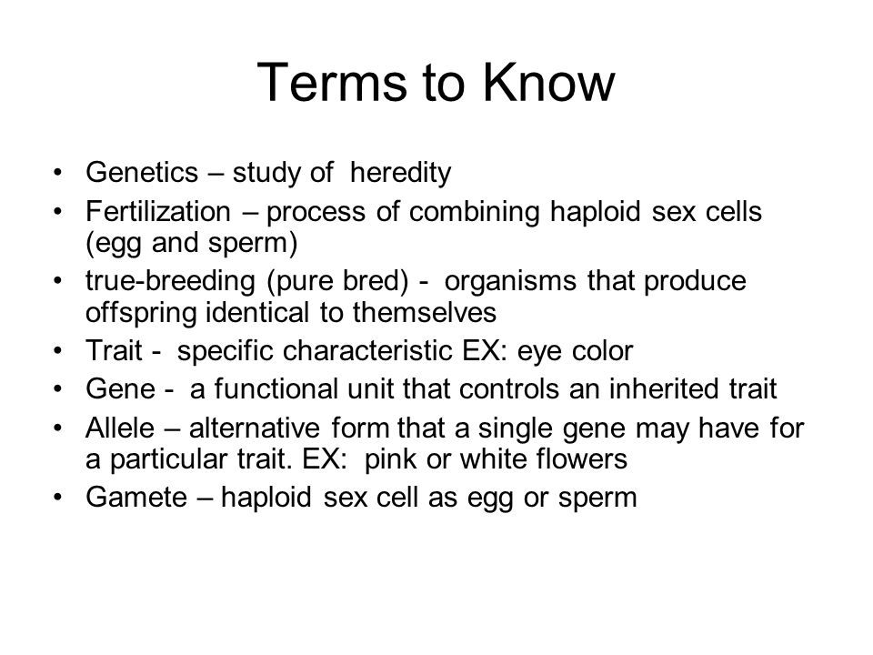 Terms to Know Genetics – study of heredity Fertilization – process of combining haploid sex cells (egg and sperm) true-breeding (pure bred) - organism