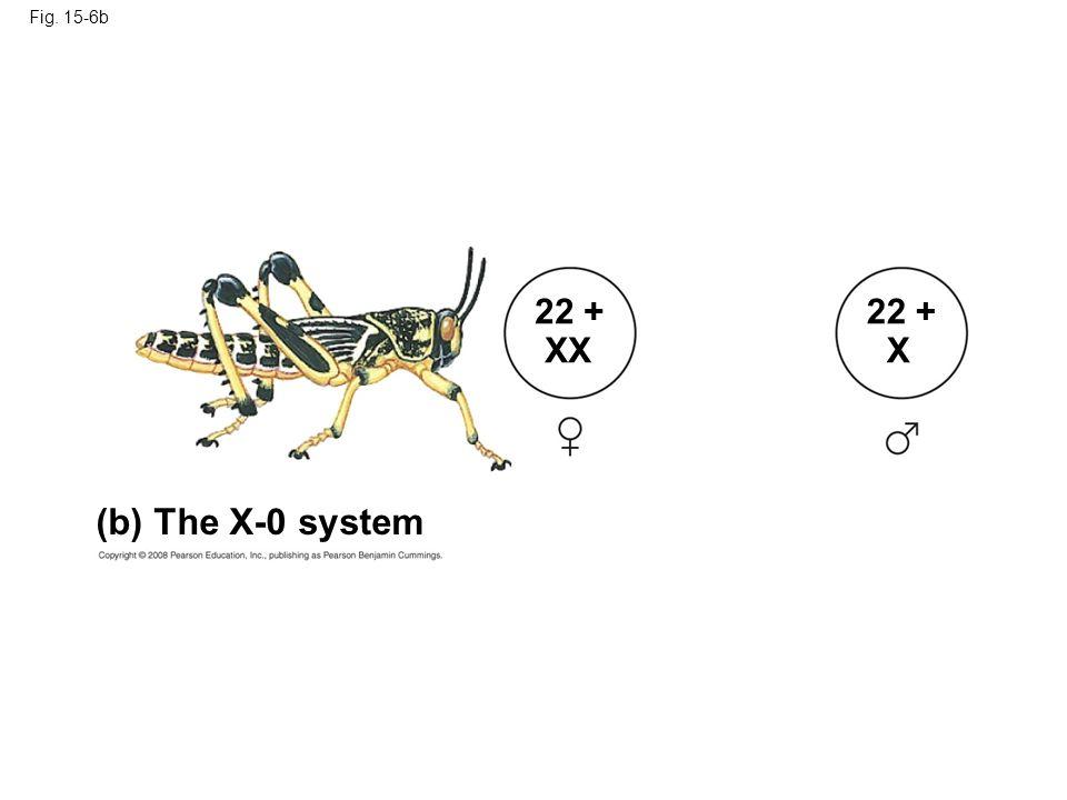 Fig. 15-6b (b) The X-0 system 22 + XX 22 + X