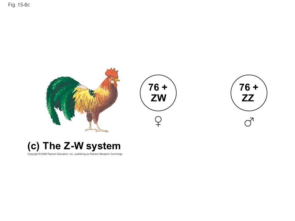 Fig. 15-6c (c) The Z-W system 76 + ZW 76 + ZZ