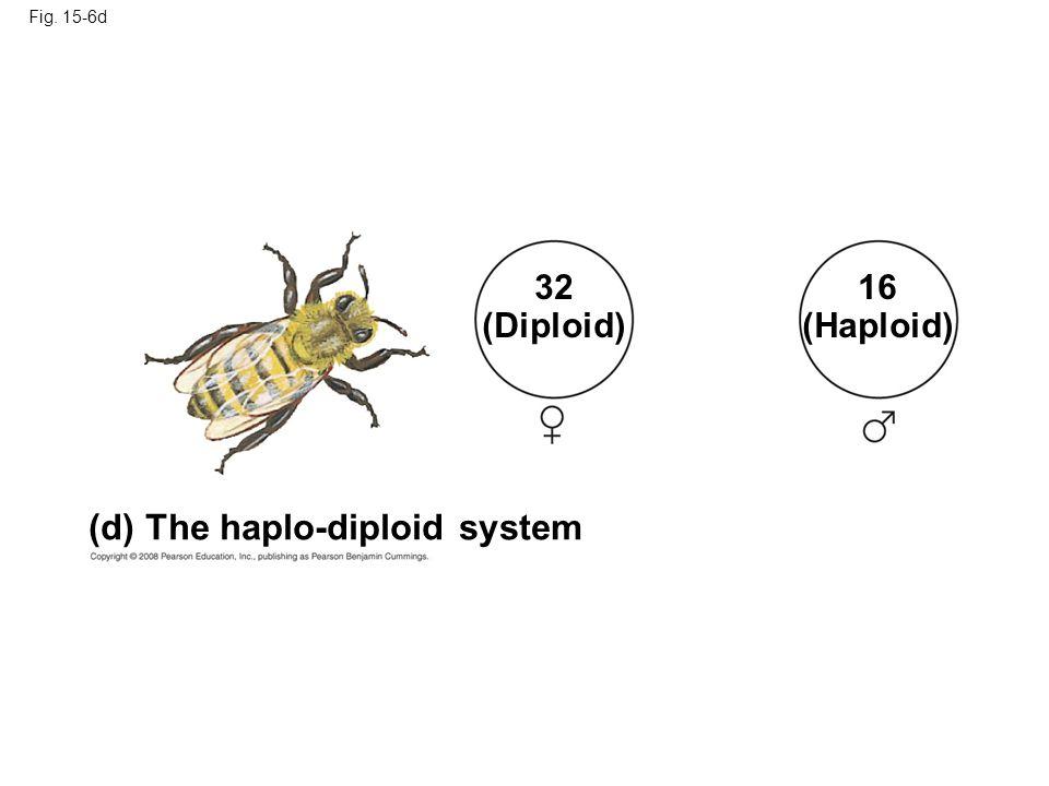 Fig. 15-6d (d) The haplo-diploid system 32 (Diploid) 16 (Haploid)