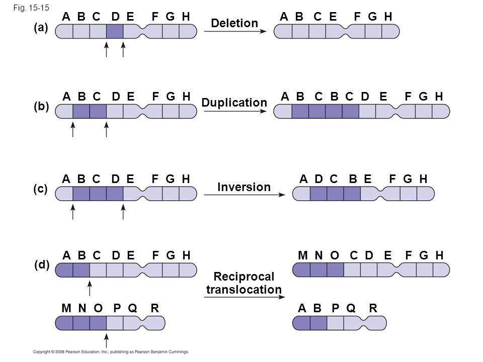Fig. 15-15 Deletion A B C D E F G HA B C E F G H (a) (b) (c) (d) Duplication Inversion Reciprocal translocation A B C D E F G H A B C B C D E F G H A