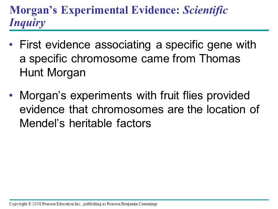 Morgan's Experimental Evidence: Scientific Inquiry First evidence associating a specific gene with a specific chromosome came from Thomas Hunt Morgan Morgan's experiments with fruit flies provided evidence that chromosomes are the location of Mendel's heritable factors Copyright © 2008 Pearson Education Inc., publishing as Pearson Benjamin Cummings