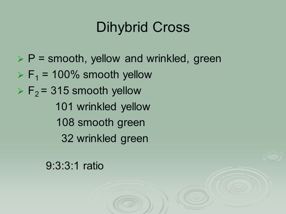 Dihybrid Cross  P = smooth, yellow and wrinkled, green  F 1 = 100% smooth yellow  F 2 = 315 smooth yellow 101 wrinkled yellow 108 smooth green 32 wrinkled green 9:3:3:1 ratio