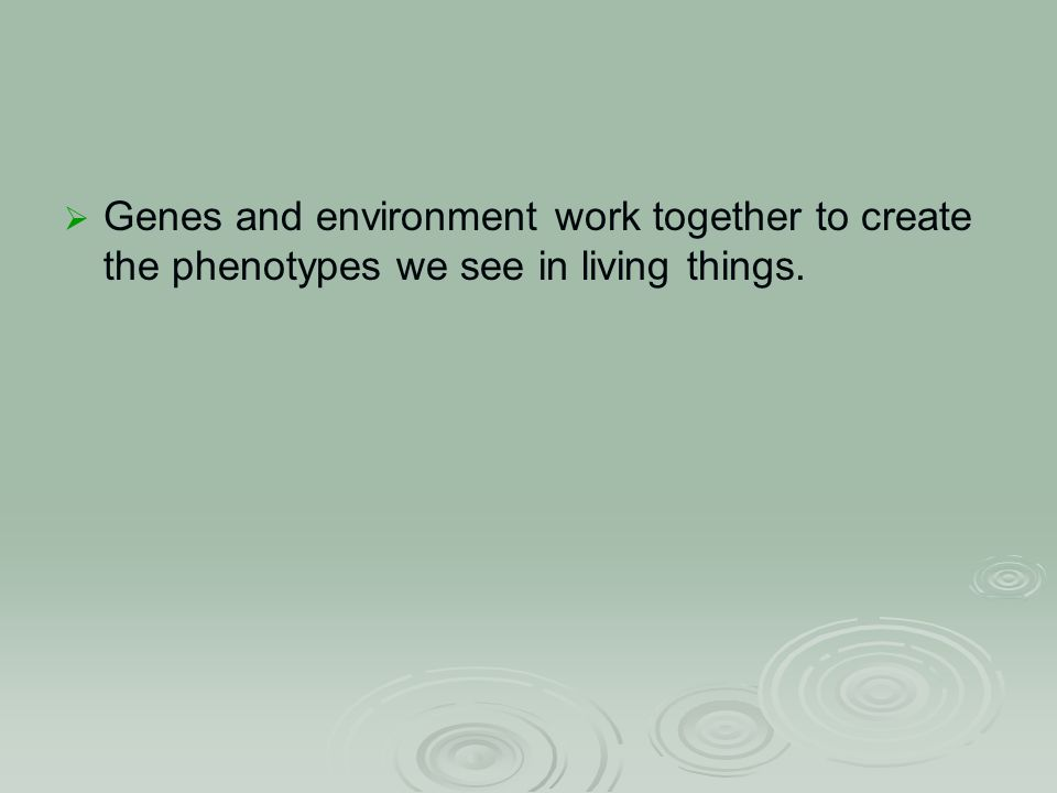  Genes and environment work together to create the phenotypes we see in living things.