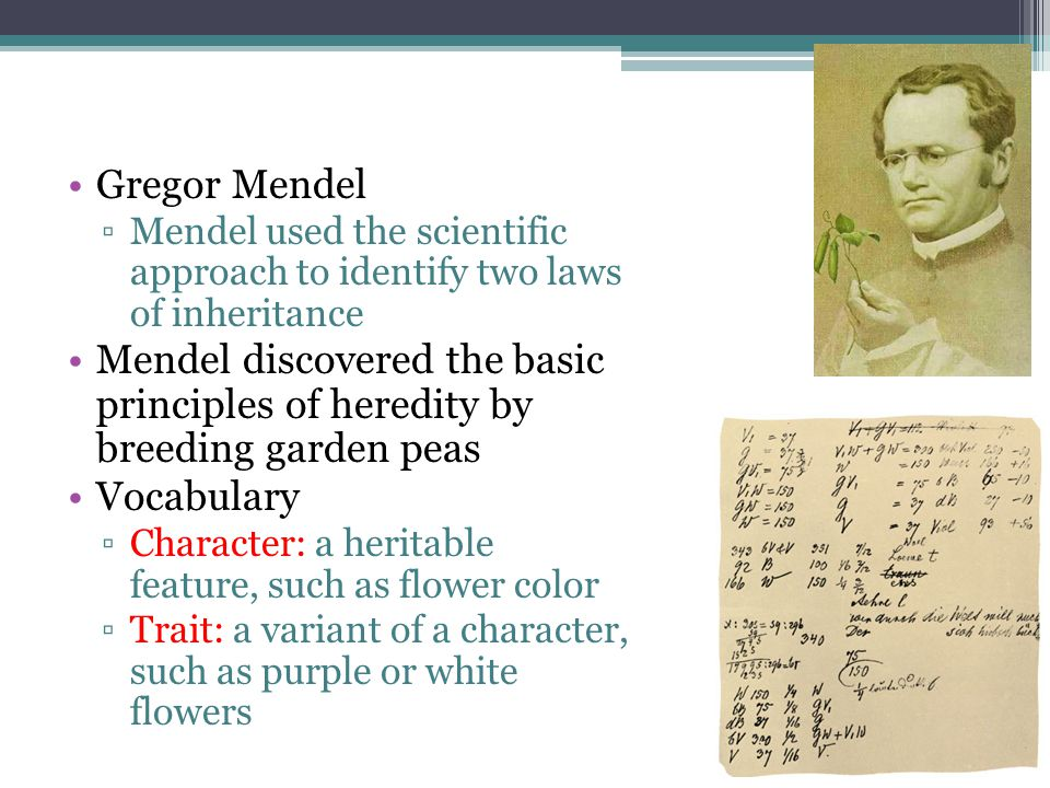 Gregor Mendel ▫Mendel used the scientific approach to identify two laws of inheritance Mendel discovered the basic principles of heredity by breeding garden peas Vocabulary ▫Character: a heritable feature, such as flower color ▫Trait: a variant of a character, such as purple or white flowers