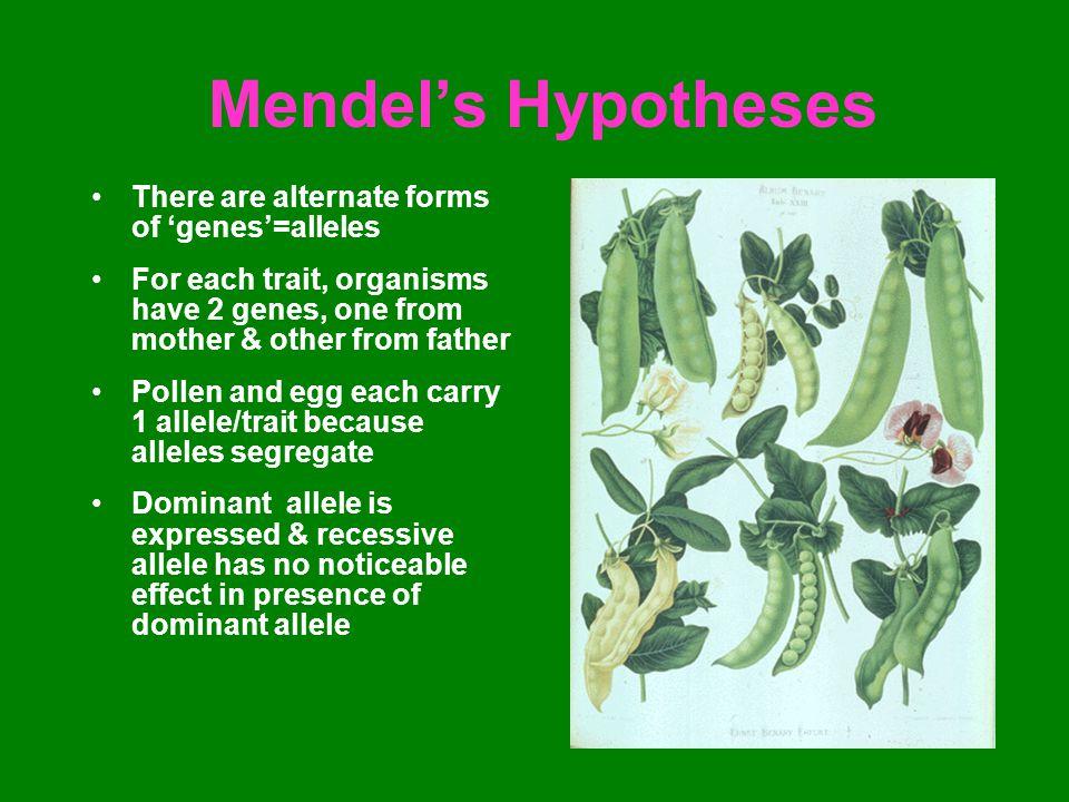 Mendel's Experiments 1.Plants must possess constant differentiating characteristics.