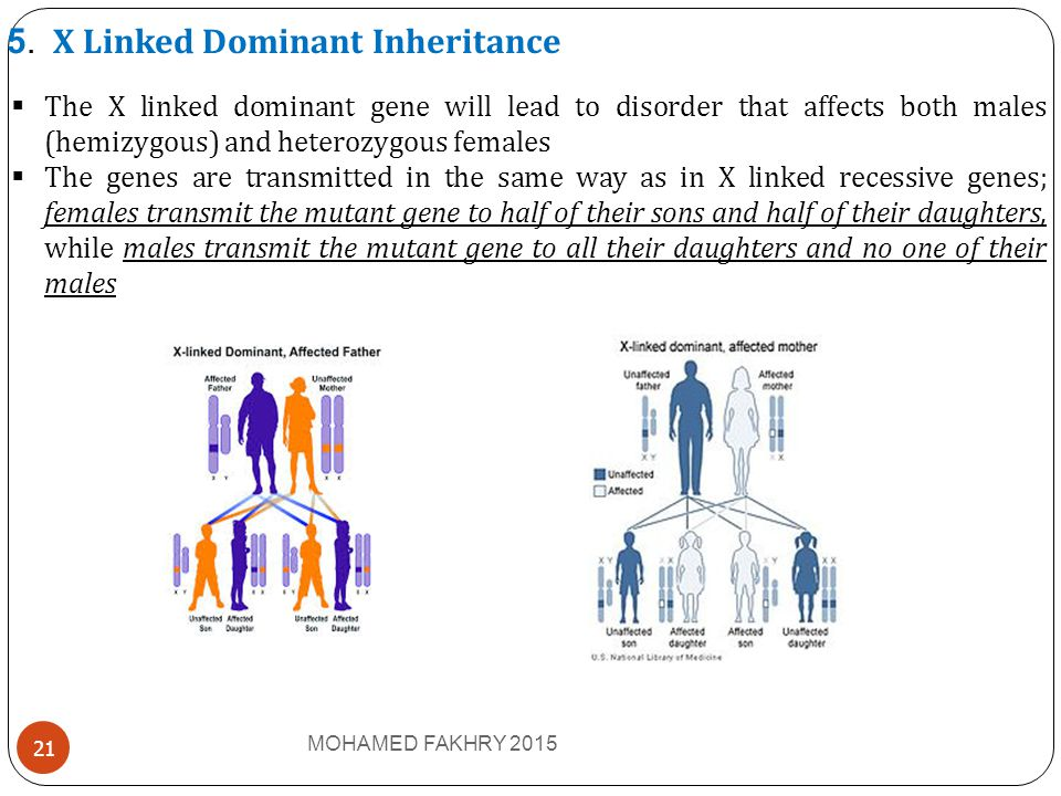 5. X Linked Dominant Inheritance  The X linked dominant gene will lead to disorder that affects both males (hemizygous) and heterozygous females  Th