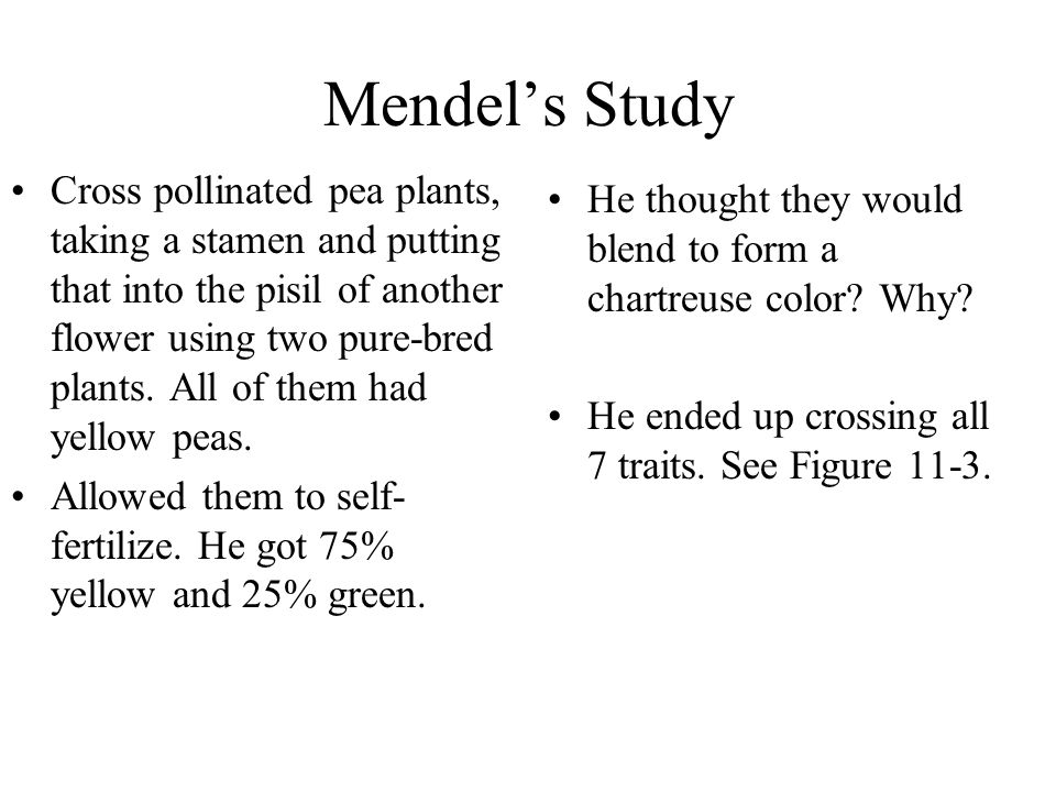 Mendel's Study Cross pollinated pea plants, taking a stamen and putting that into the pisil of another flower using two pure-bred plants. All of them