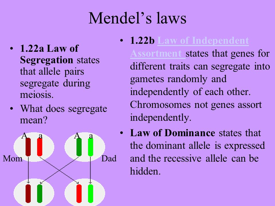 Mendel's laws 1.22a Law of Segregation states that allele pairs segregate during meiosis. What does segregate mean? 1.22b Law of Independent Assortmen