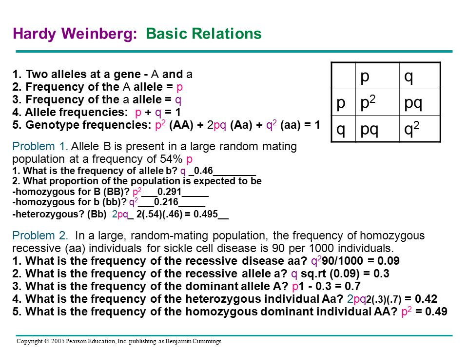 Copyright © 2005 Pearson Education, Inc. publishing as Benjamin Cummings Hardy Weinberg: Basic Relations 1. Two alleles at a gene - A and a 2. Frequen