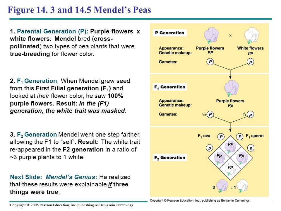 Copyright © 2005 Pearson Education, Inc.publishing as Benjamin Cummings Figure 14.
