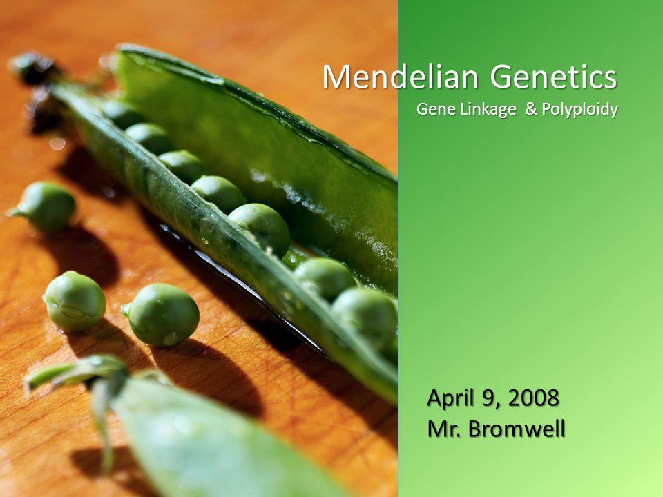 April 2008 Mendelian Genetics Gene Linkage & Polyploidy April 9, 2008 Mr. Bromwell