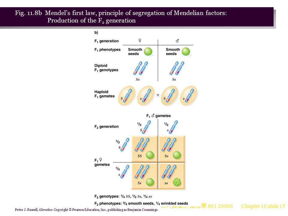 台大農藝系 遺傳學 601 20000 Chapter 10 slide 16 The Principle of Segregation Animation: Mendel s Principle of Segregation 1.The first Mendelian law, the principle of segregation, states: Recessive characters, which are masked in the F 1 from a cross between two true-breeding strains, reappear in a specific proportion in the F 2. This is because alleles segregate during anaphase I of meiosis, and progeny are then produced by random combination of the gametes.