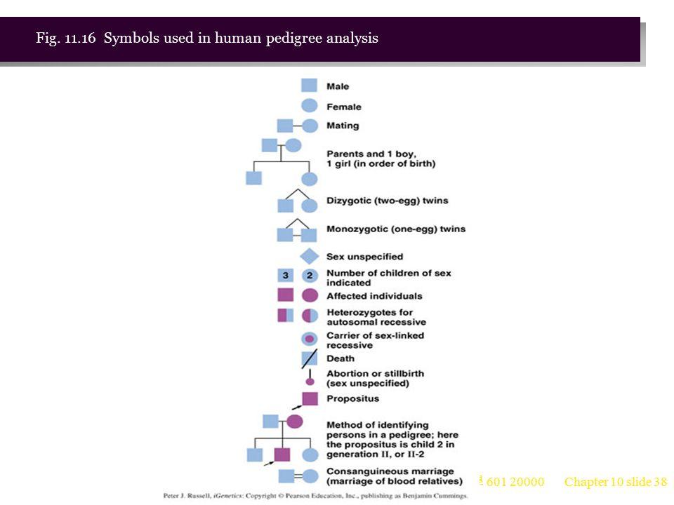 台大農藝系 遺傳學 601 20000 Chapter 10 slide 39 Fig. 11.17 Example of a human pedigree