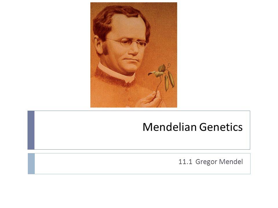 Mendelian Genetics 11.1 Gregor Mendel