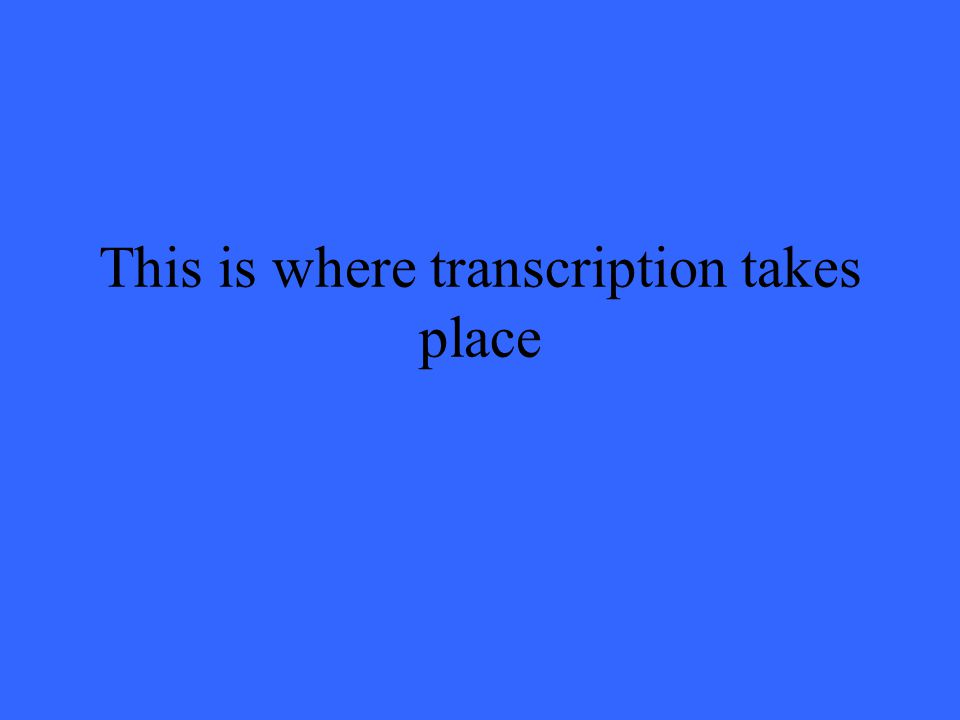 This is where transcription takes place