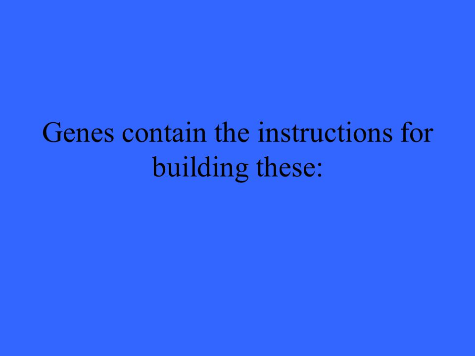 Genes contain the instructions for building these: