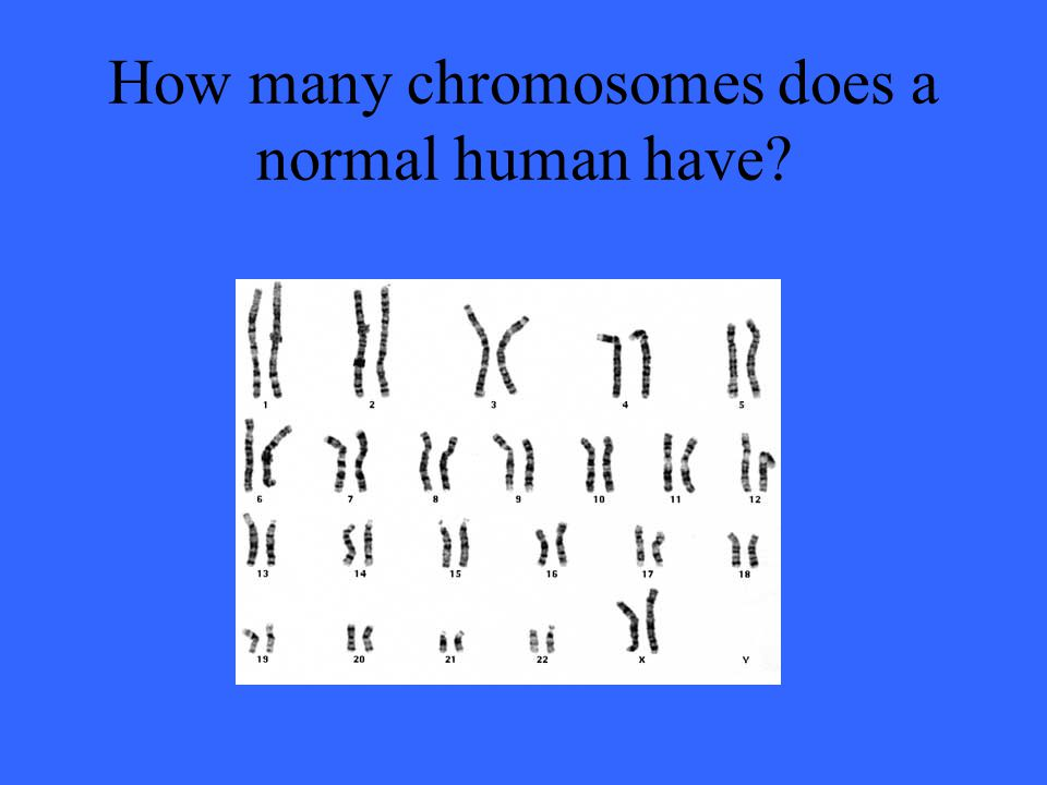 How many chromosomes does a normal human have?