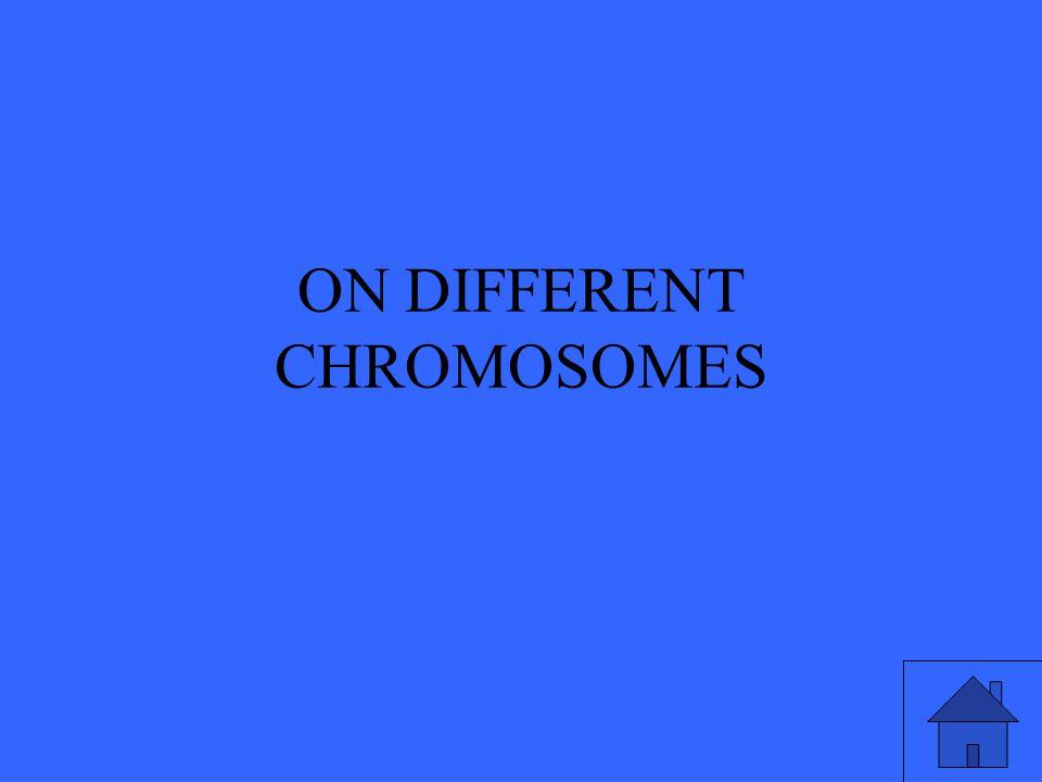 ON DIFFERENT CHROMOSOMES