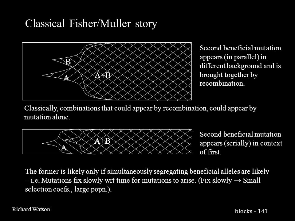 blocks - 141 Richard Watson Classical Fisher/Muller story A A+B A B Second beneficial mutation appears (in parallel) in different background and is brought together by recombination.