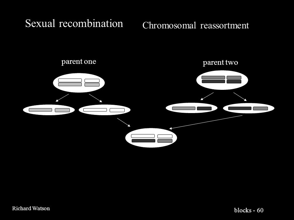 blocks - 60 Richard Watson Sexual recombination parent one parent two Chromosomal reassortment