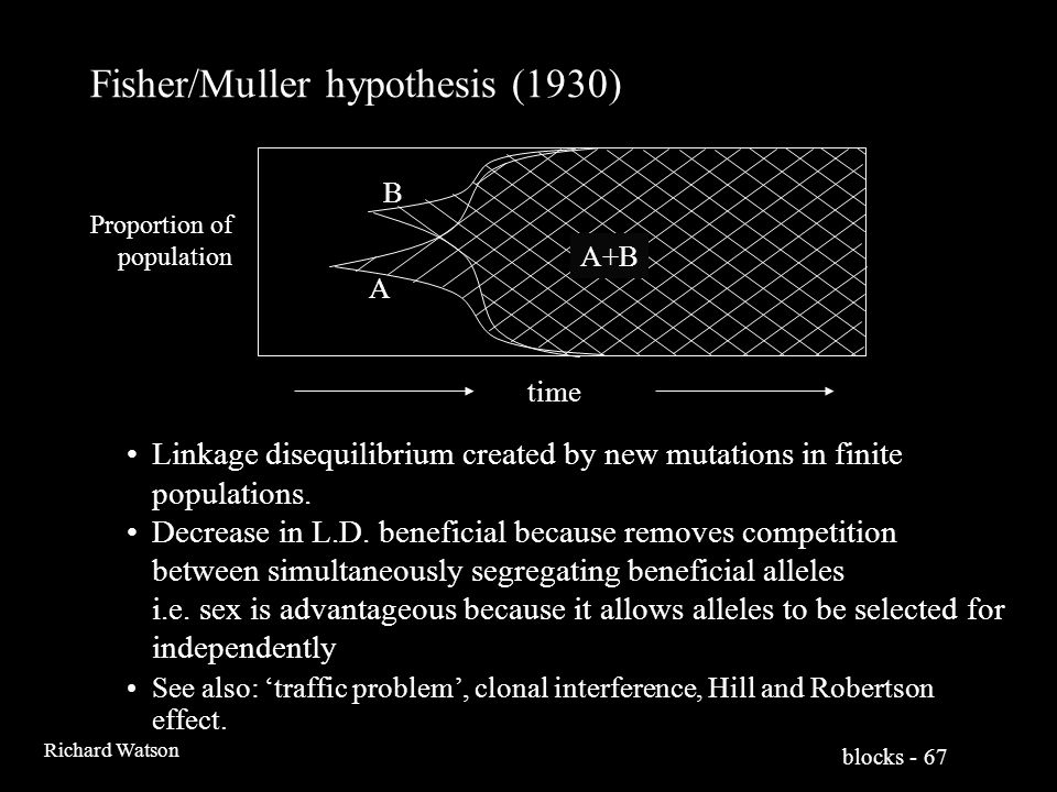 blocks - 67 Richard Watson Fisher/Muller hypothesis (1930) A B A B A+B Linkage disequilibrium created by new mutations in finite populations.