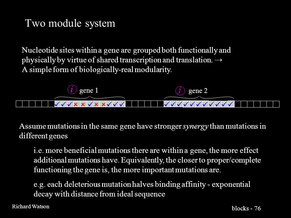blocks - 76 Richard Watson Two module system gene 1 gene 2    i j Nucleotide sites within a gene are grouped both functionally and physically by virtue of shared transcription and translation.