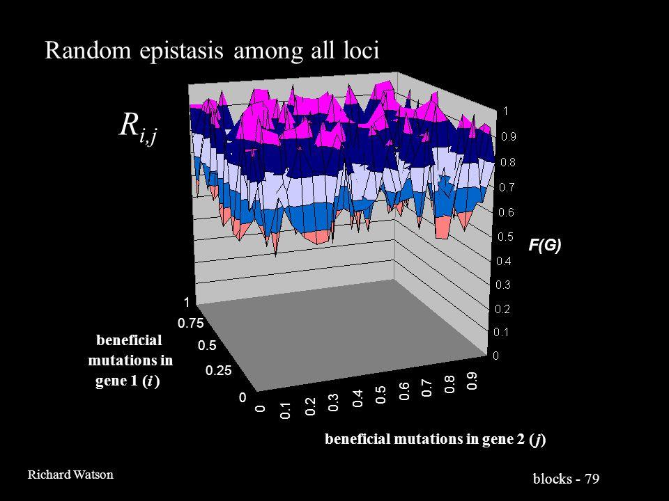 blocks - 79 Richard Watson 0 0.1 0.2 0.3 0.4 0.5 0.6 0.7 0.8 0.9 0 0.25 0.5 0.75 1 F(G) beneficial mutations in gene 2 ( j ) beneficial mutations in gene 1 ( i ) R i,j Random epistasis among all loci