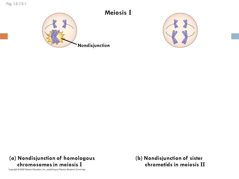 Fig. 15-13-1 Meiosis I (a) Nondisjunction of homologous chromosomes in meiosis I (b) Nondisjunction of sister chromatids in meiosis II Nondisjunction