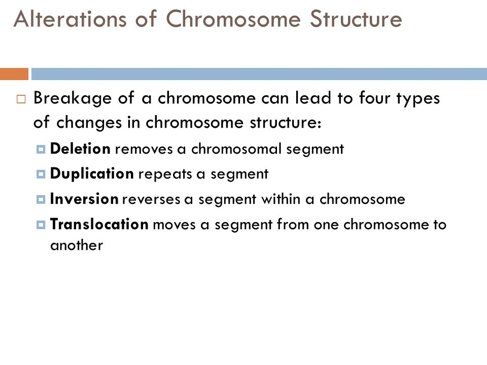 Alterations of Chromosome Structure  Breakage of a chromosome can lead to four types of changes in chromosome structure:  Deletion removes a chromosomal segment  Duplication repeats a segment  Inversion reverses a segment within a chromosome  Translocation moves a segment from one chromosome to another