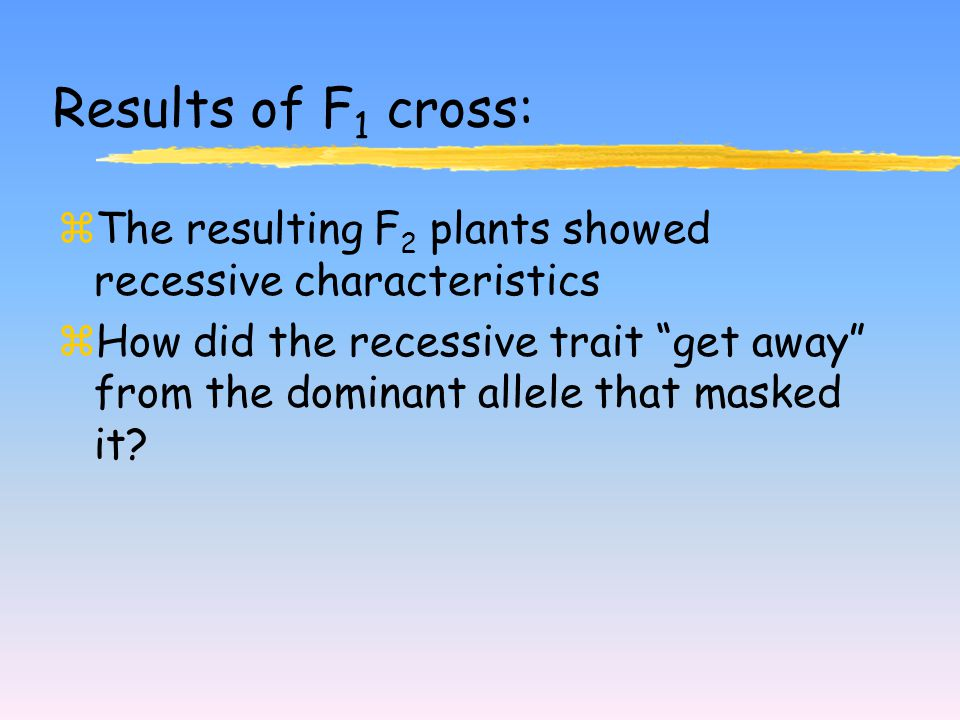 Results of F 1 cross: zThe resulting F 2 plants showed recessive characteristics zHow did the recessive trait get away from the dominant allele that masked it