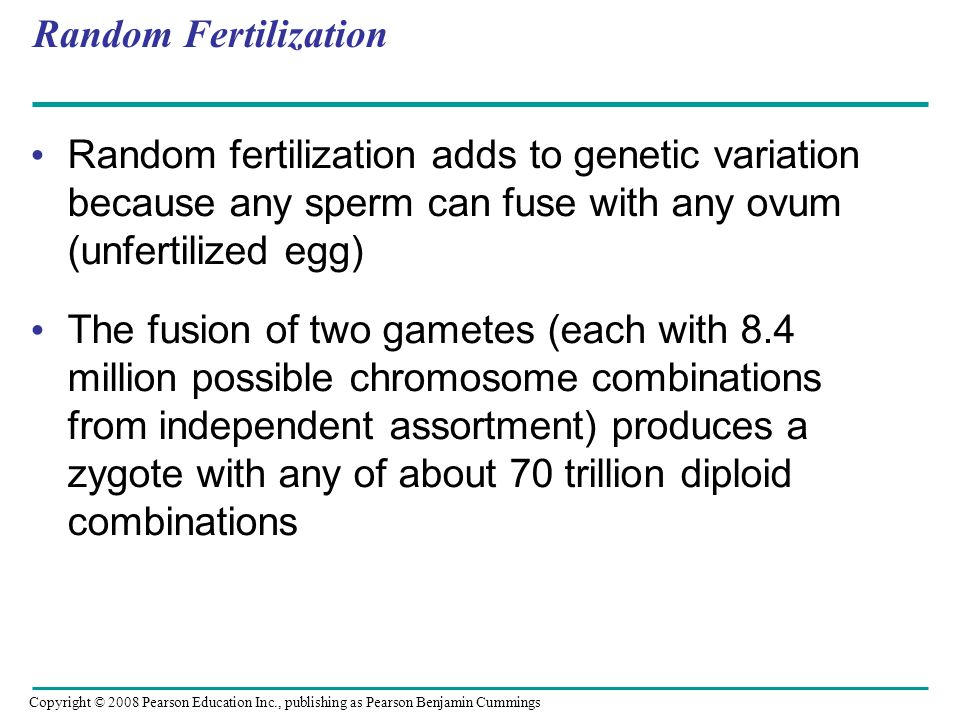 Random Fertilization Random fertilization adds to genetic variation because any sperm can fuse with any ovum (unfertilized egg) The fusion of two game