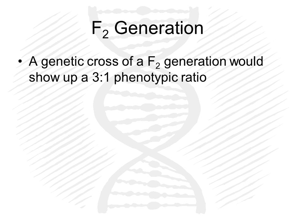 F 2 Generation A genetic cross of a F 2 generation would show up a 3:1 phenotypic ratio