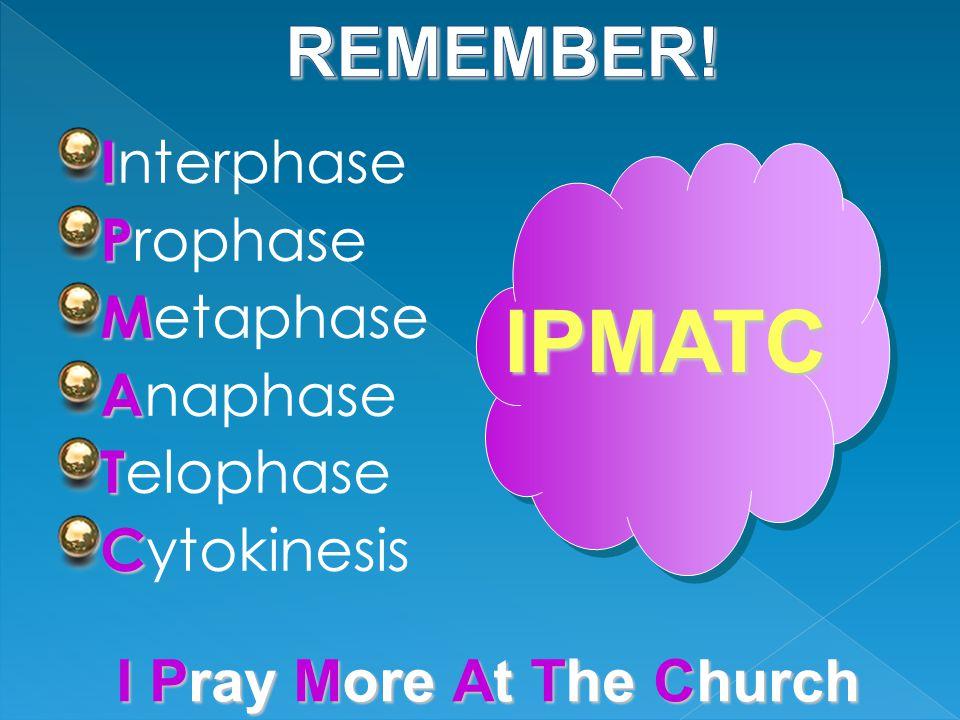 I I nterphase P P rophase M M etaphase A A naphase T T elophase C C ytokinesis IPMATC I Pray M ore At T he Church