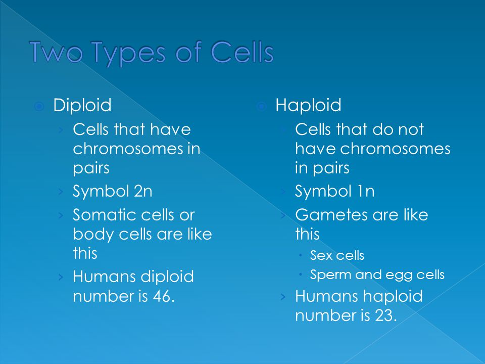  Diploid › Cells that have chromosomes in pairs › Symbol 2n › Somatic cells or body cells are like this › Humans diploid number is 46.  Haploid › Ce