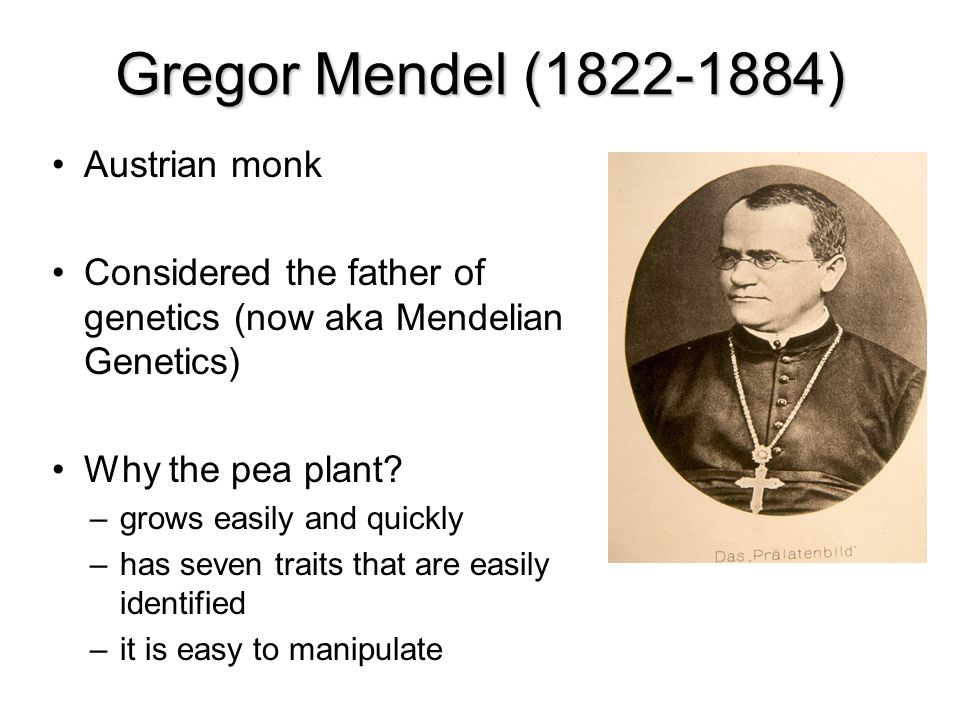 Gregor Mendel (1822-1884)‏ Austrian monk Considered the father of genetics (now aka Mendelian Genetics)‏ Why the pea plant? –grows easily and quickly