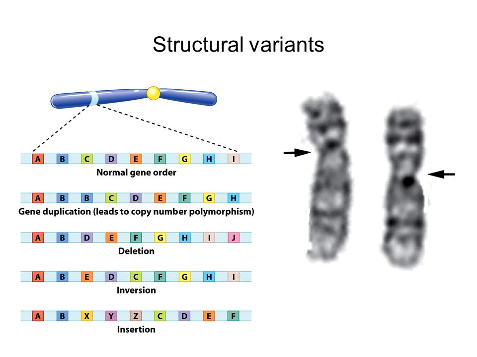 Structural variants