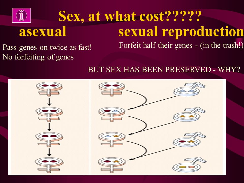 Sex, at what cost????? asexual sexual reproduction Pass genes on twice as fast! No forfeiting of genes Forfeit half their genes - (in the trash!) BUT