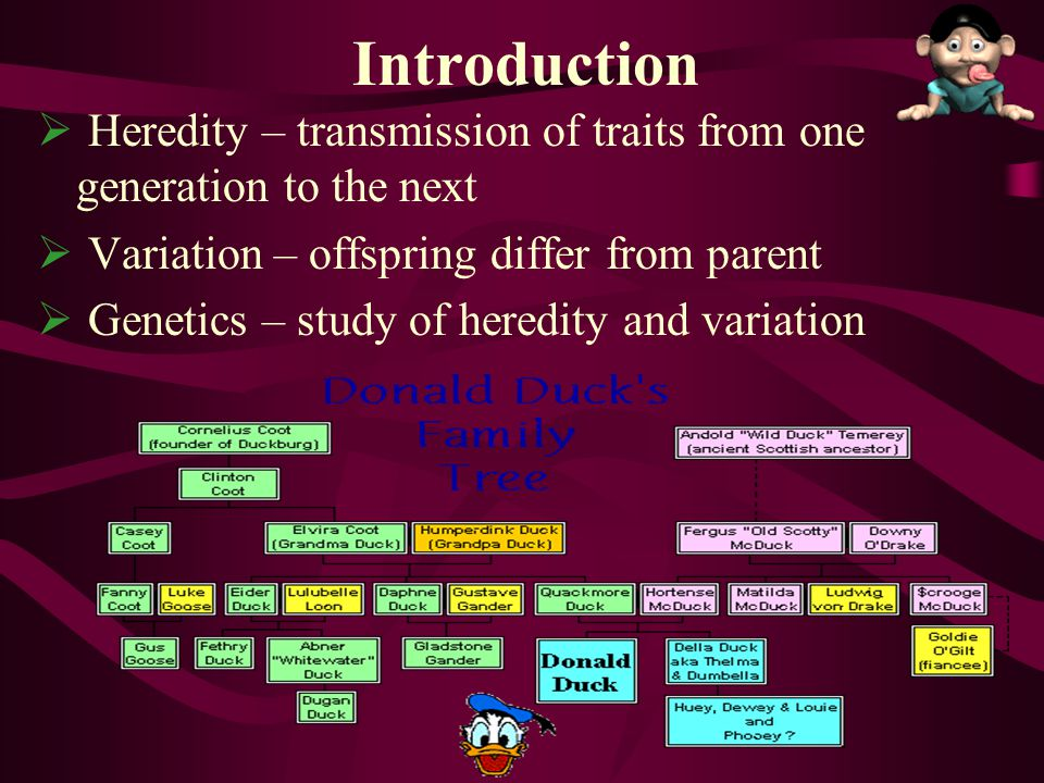  Heredity – transmission of traits from one generation to the next  Variation – offspring differ from parent  Genetics – study of heredity and vari